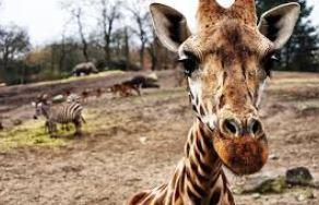 safari Op vakantie in Afrika